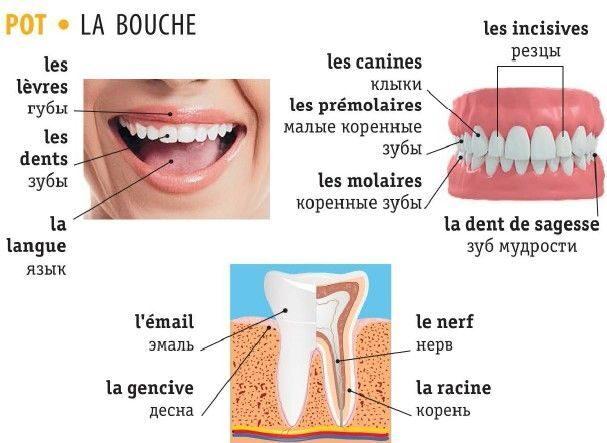 рот на французском языке